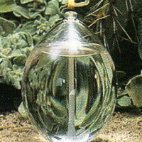 Elliptical Clear 6 inches Oil Lamp