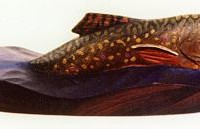 Breaking Brook Trout Carving