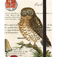 Little Owl Journal