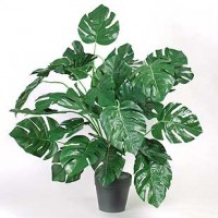 Silk Philodendron Plant