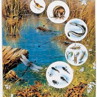 Water Animals Puzzle